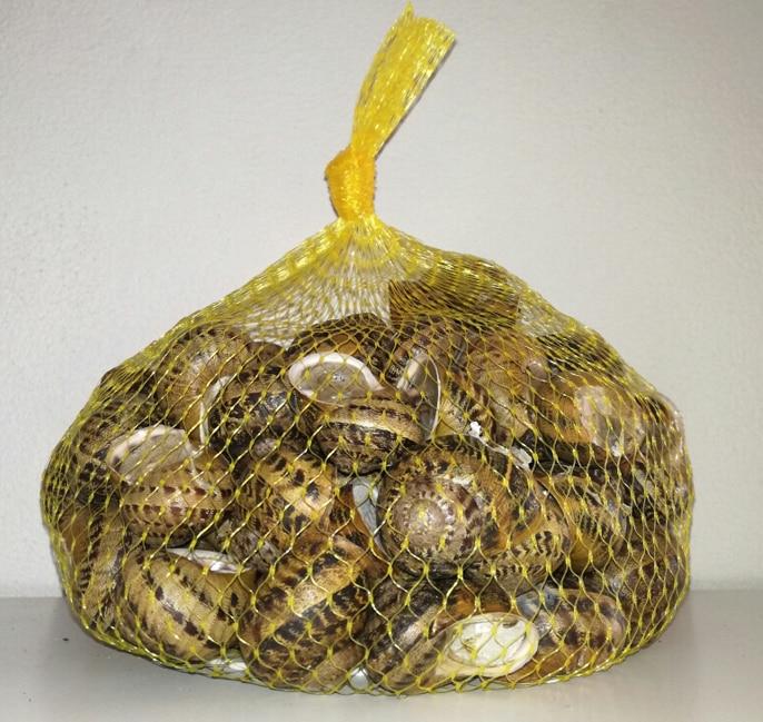 vendita lumache da gastronomia helix Helix Aperta Helix Aspersa Maxima Helix Aspersa Muller azienda lumaca tenuta pra de oro creme-cosmetiche alla bava di lumaca